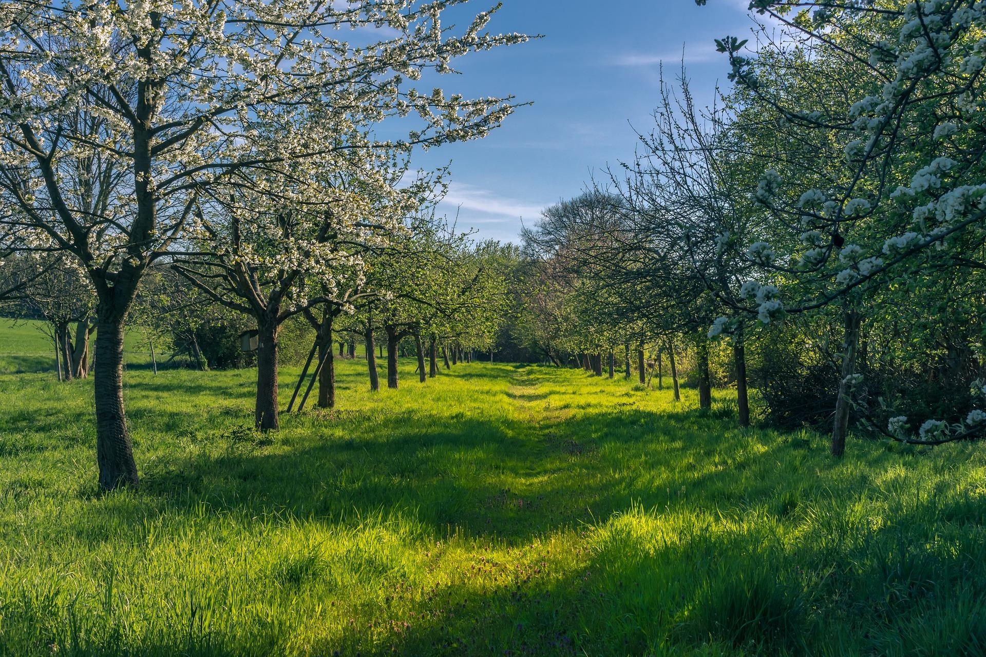spring-4158957_1920